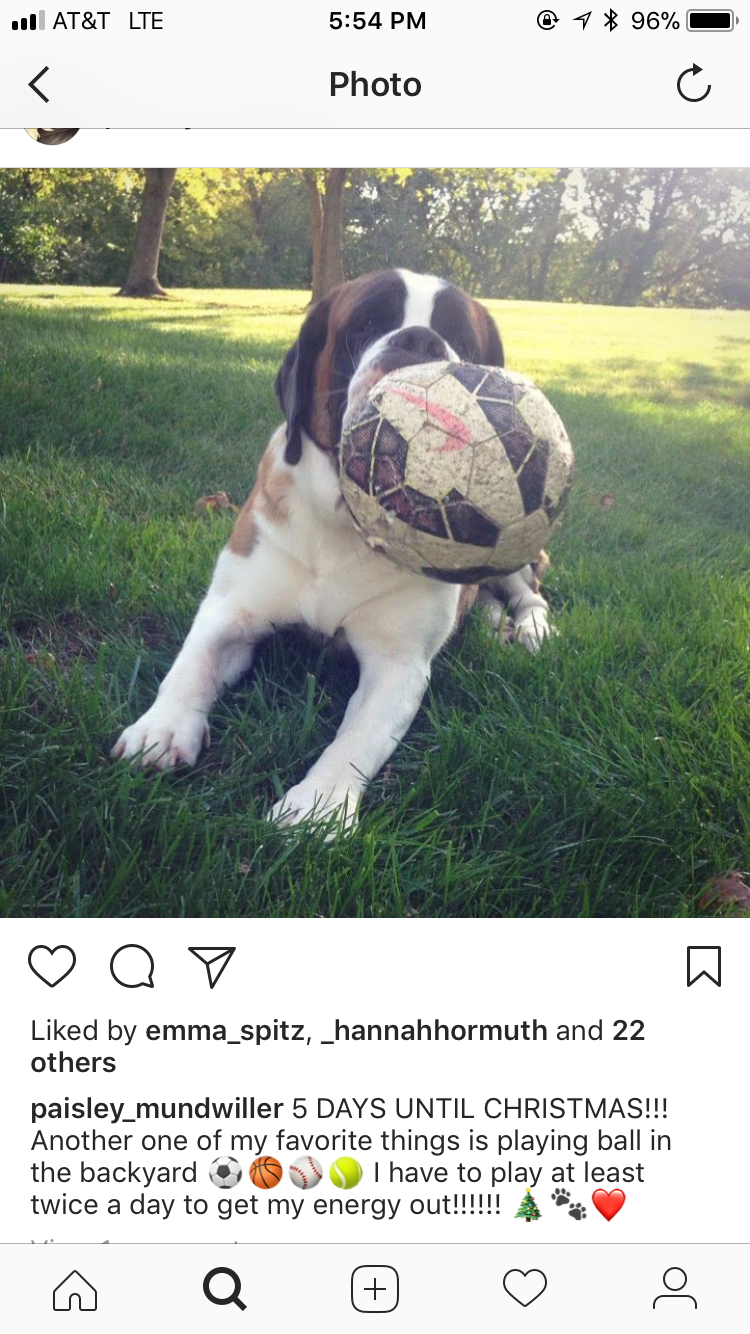 Post from Paisley with her ball