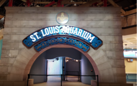 Visit the new St. Louis Aquarium on your staycation!