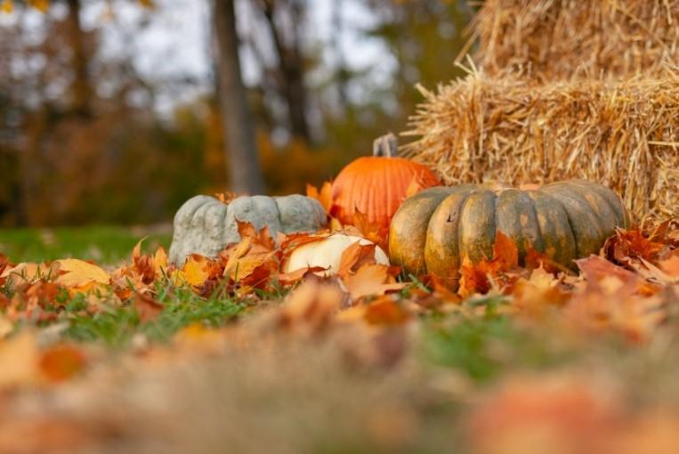 Creating a Fall Bucket List